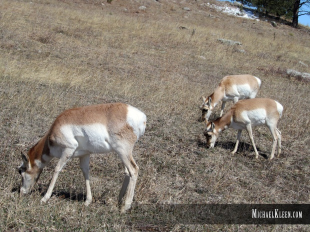 custer_state_park03