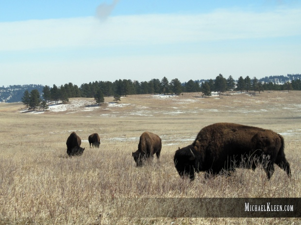 custer_state_park04