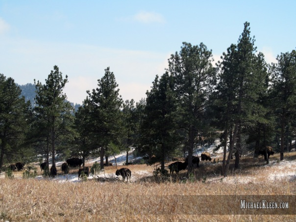 custer_state_park05