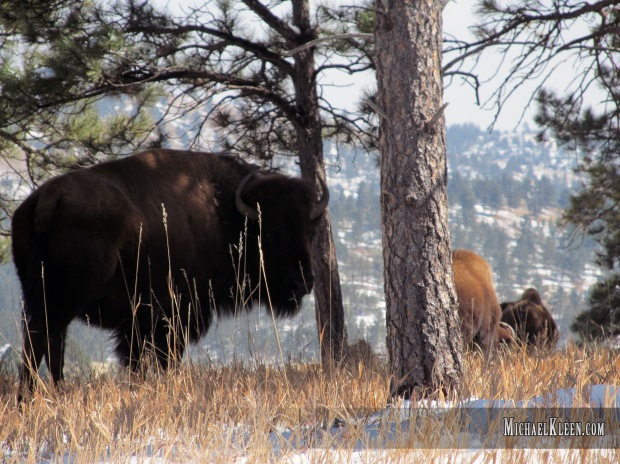 custer_state_park06
