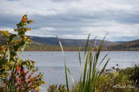 Labrador Pond in Labrador Hollow Unique Area. Photo by Michael Kleen