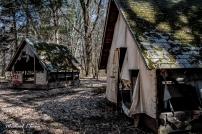Beechwood State Park outside Sodus, New York. Photo by Michael Kleen